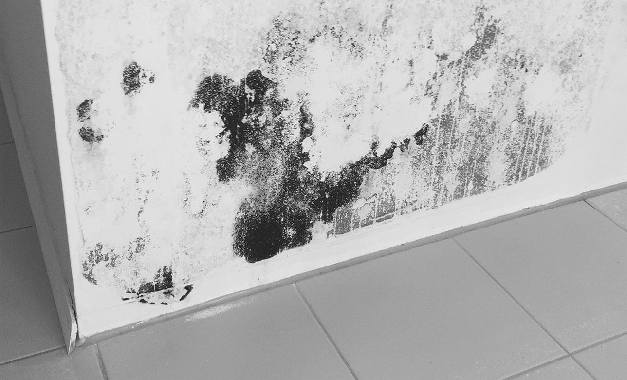 Schimmelsanierung, Walter Schnee Anstrich und Bautenschutz